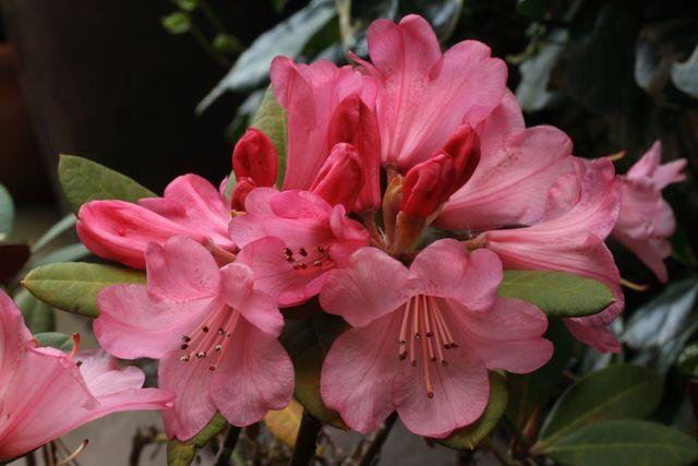 Entretien du jardin : les erreurs à éviter